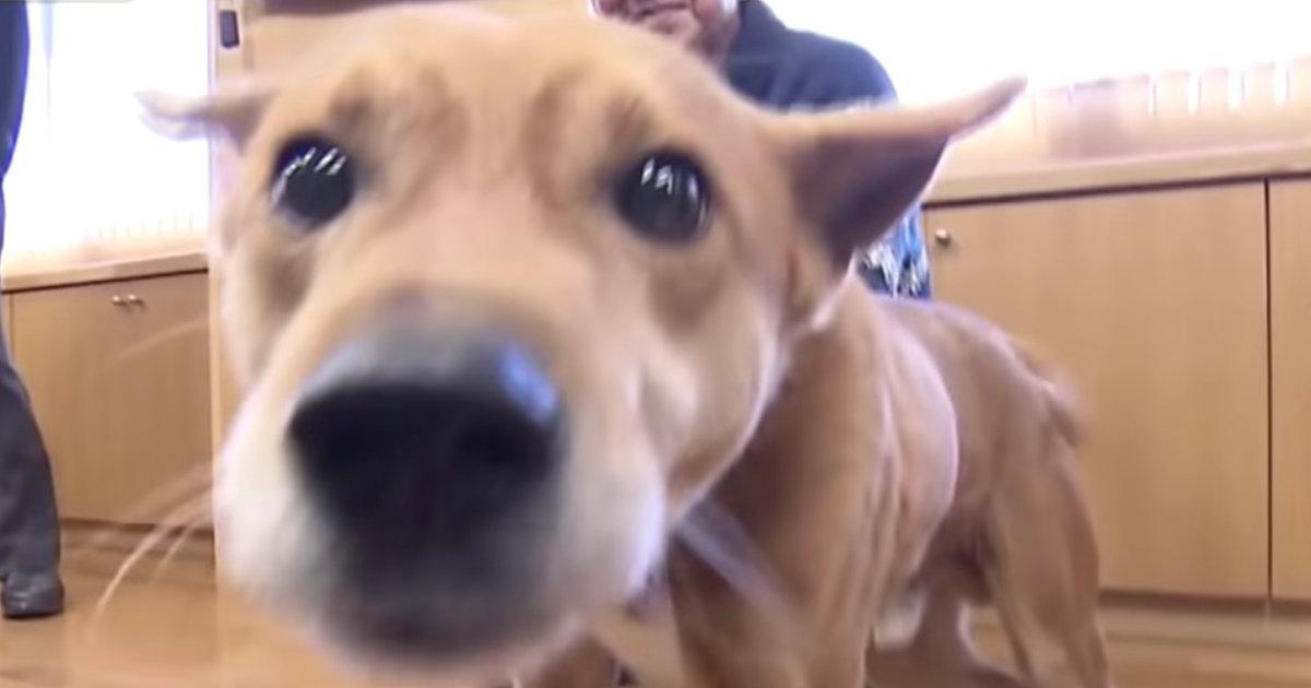 【福岡】「こっちだワン!」犯人の居場所を教えた犬、感謝状と大好物の魚風味のドッグフードを贈られ大喜び!
