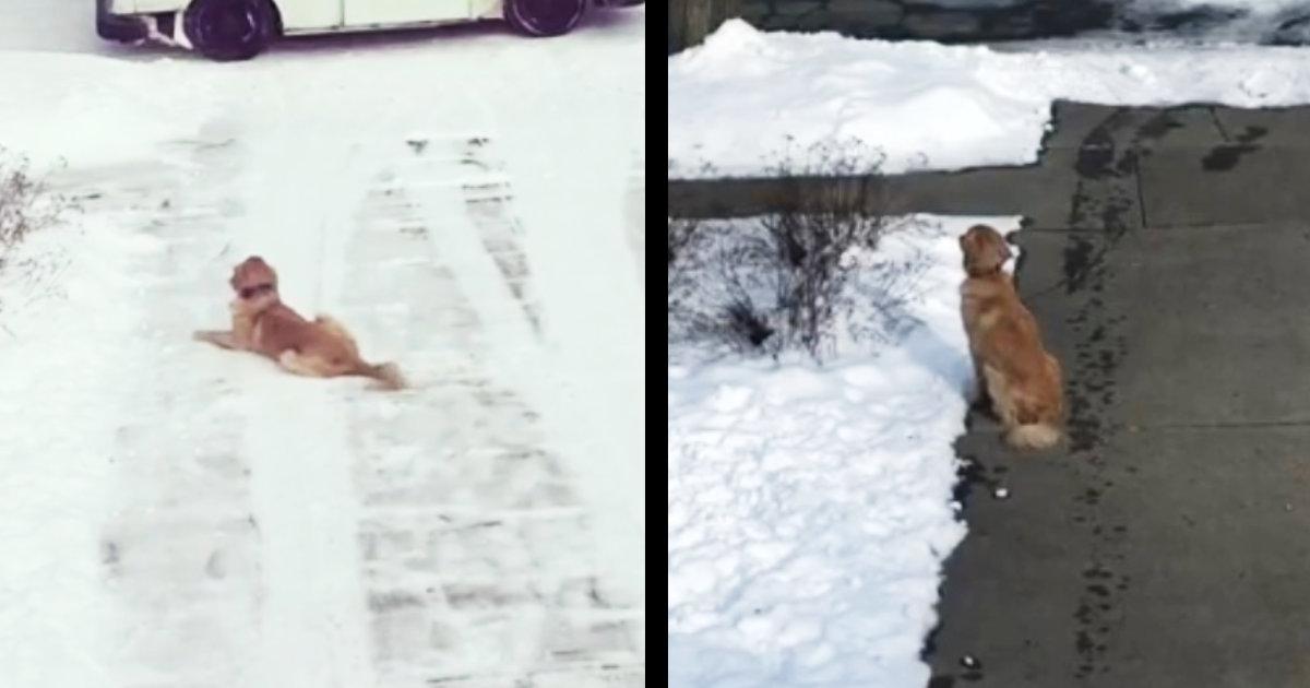 毎日大好きな配達員さんを待っている犬。配達員さんに起きた悲しい出来事を犬は癒していた