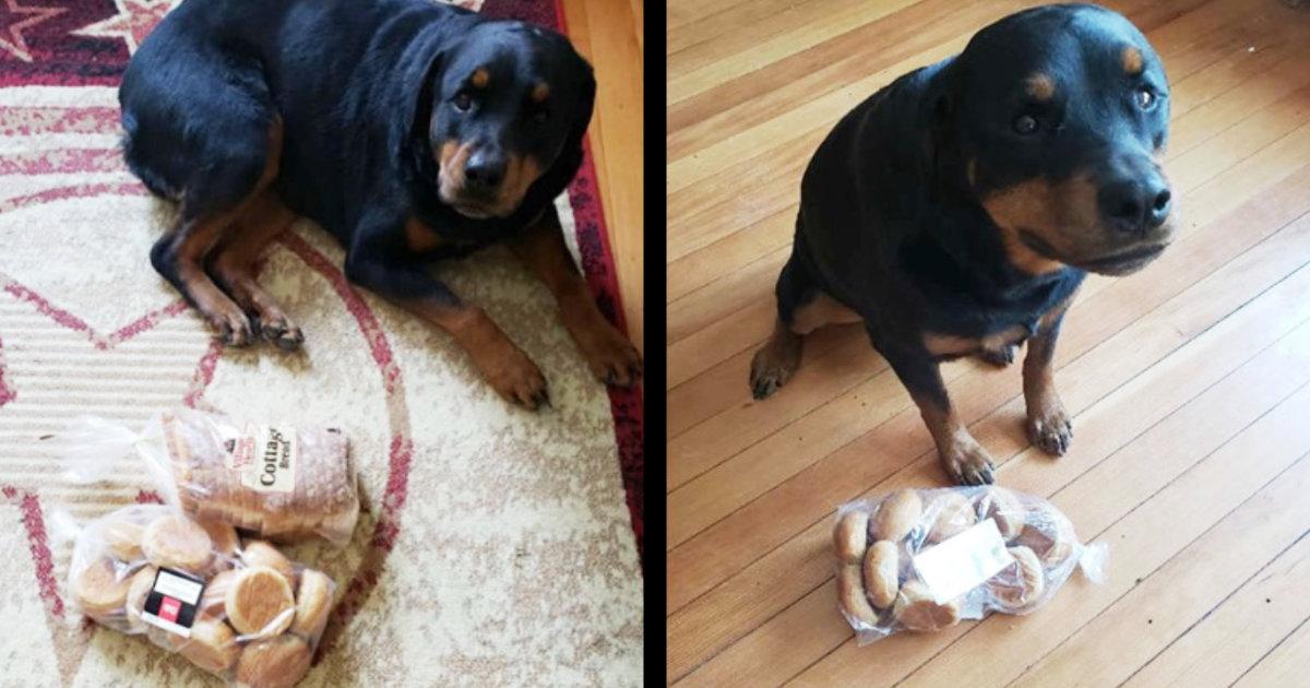 家を留守にする度にパンを出して持ってきてしまう犬。しかしその理由が判明し感動したと話題に!