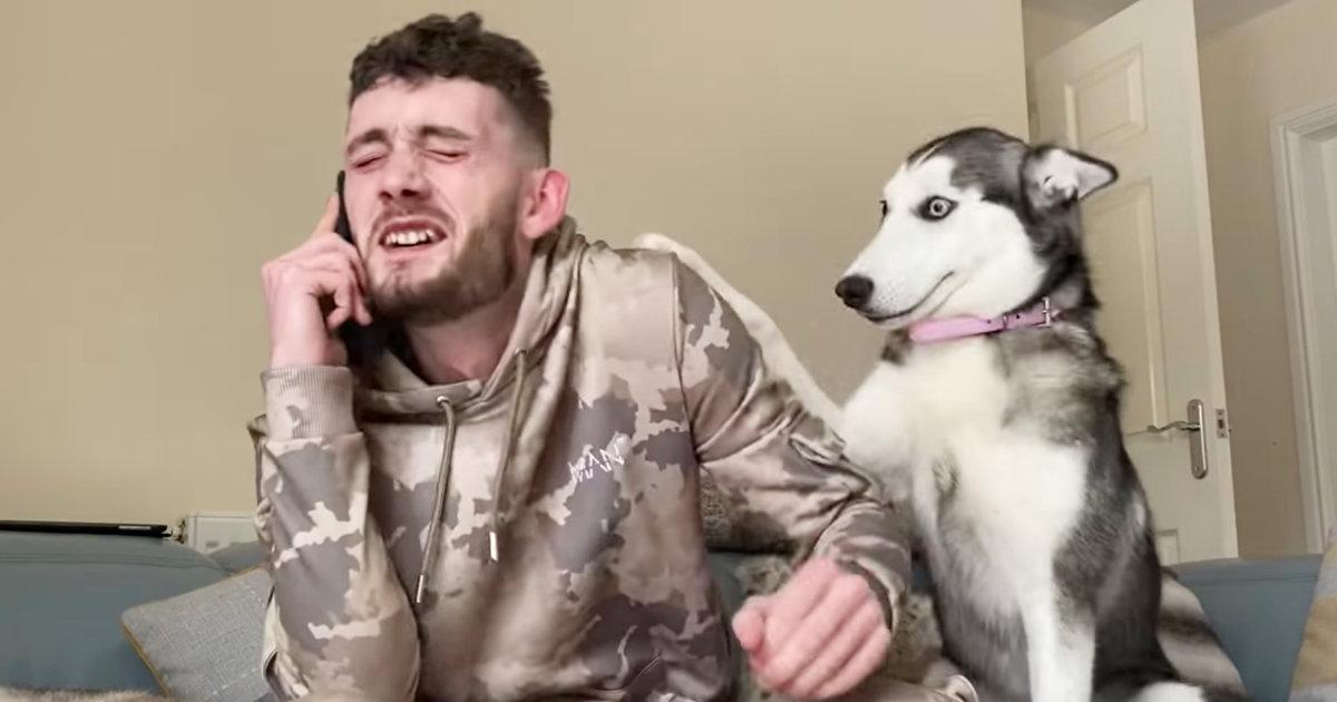 「電話なんて後でいいじゃん!」飼い主さんの電話中、かまって欲しいハスキー犬が邪魔しまくってくる姿が可愛すぎると話題に!