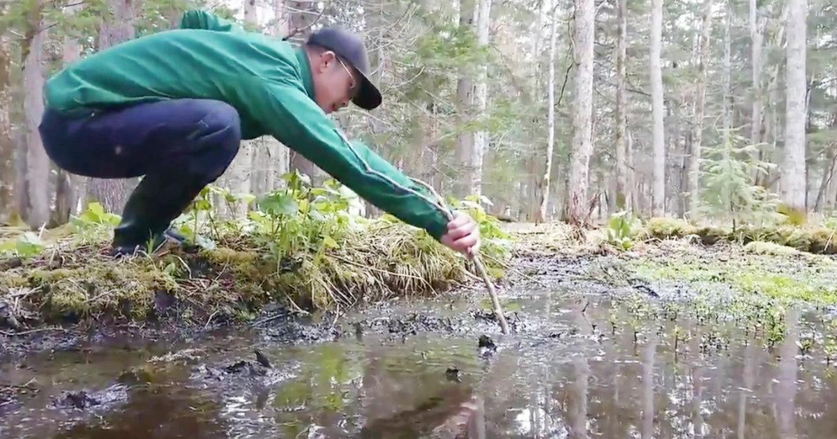 【北海道】 「底無し沼を発見しました」ただの小さい水溜りかと思って長い木の棒を入れたら底が無かったと話題に!