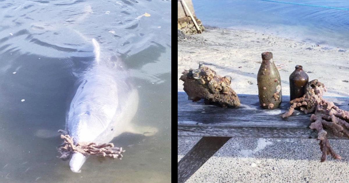 イルカにエサをあげるボランティアを続けていたら、お礼に「海の宝物」をプレゼントしてくれるようになったと話題に!