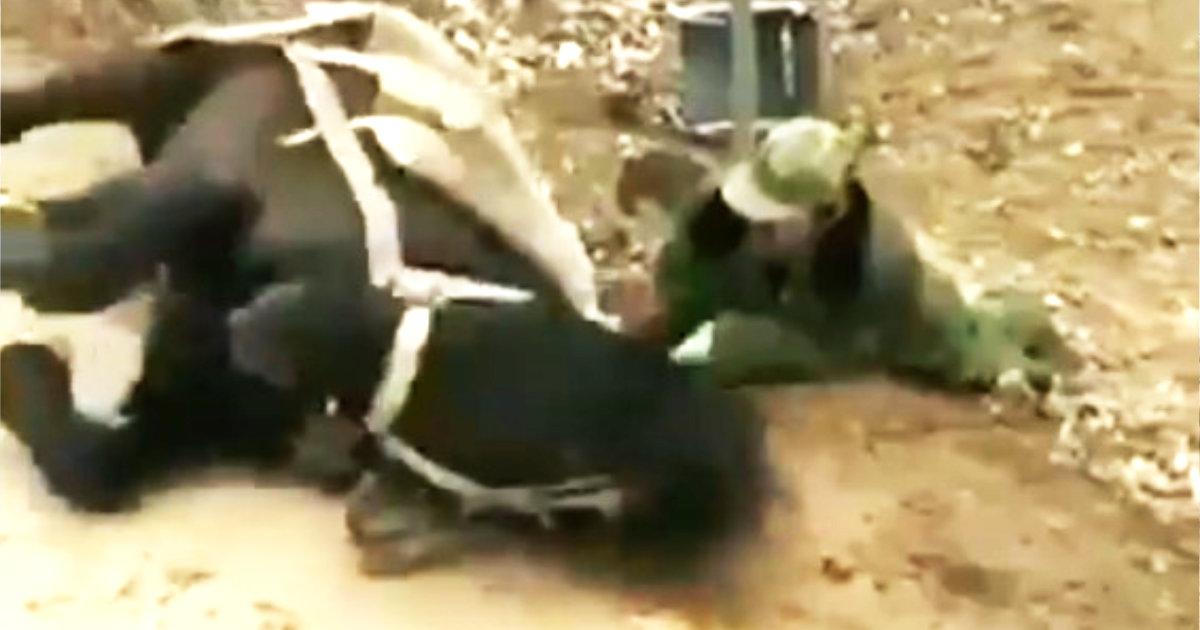 車椅子から落ちてしまった人を背中に乗せて救助する馬がスゴい!