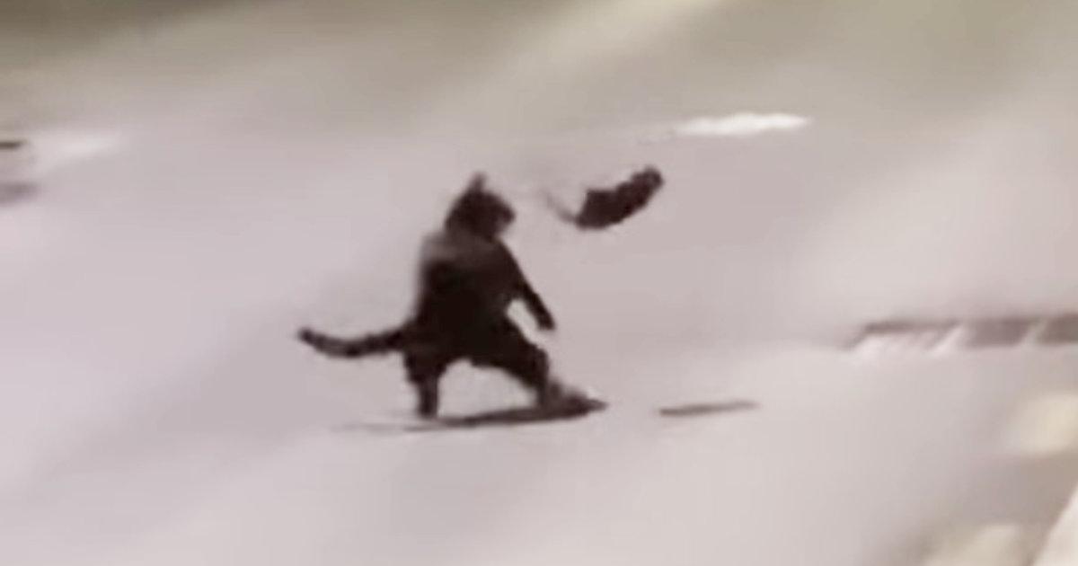 まさに「窮鼠猫を噛む」!逃げ場を失ったネズミが猫と闘う動画が話題に!