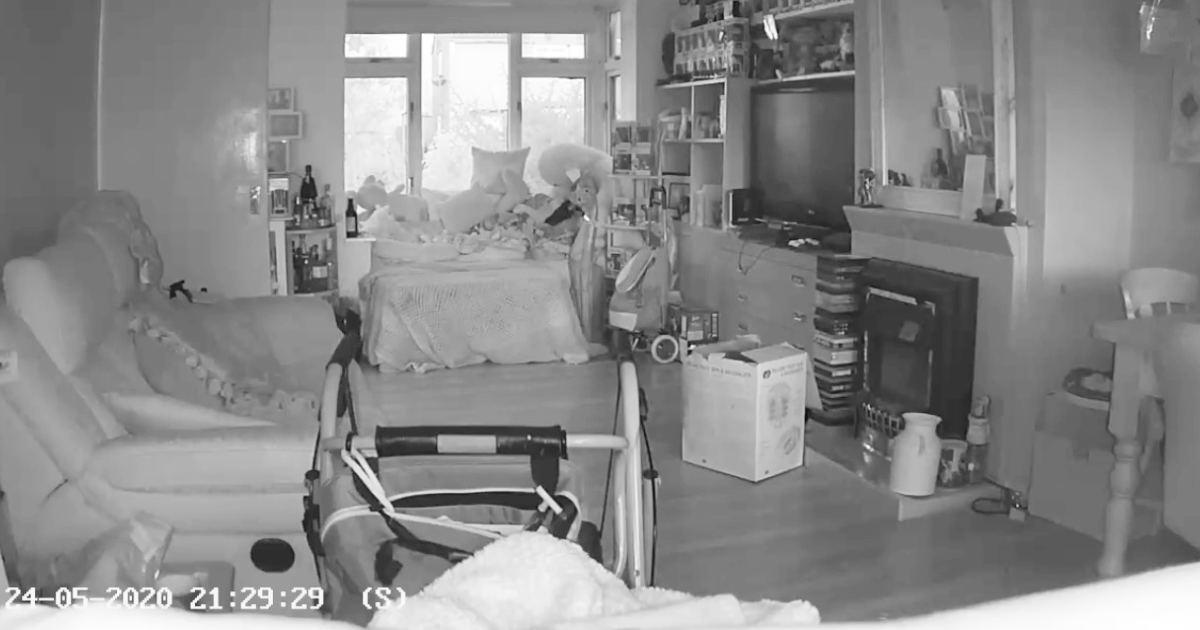「幽霊かな」「会いに来たんだね」監視カメラに亡き愛猫のようなの姿が映り話題に!