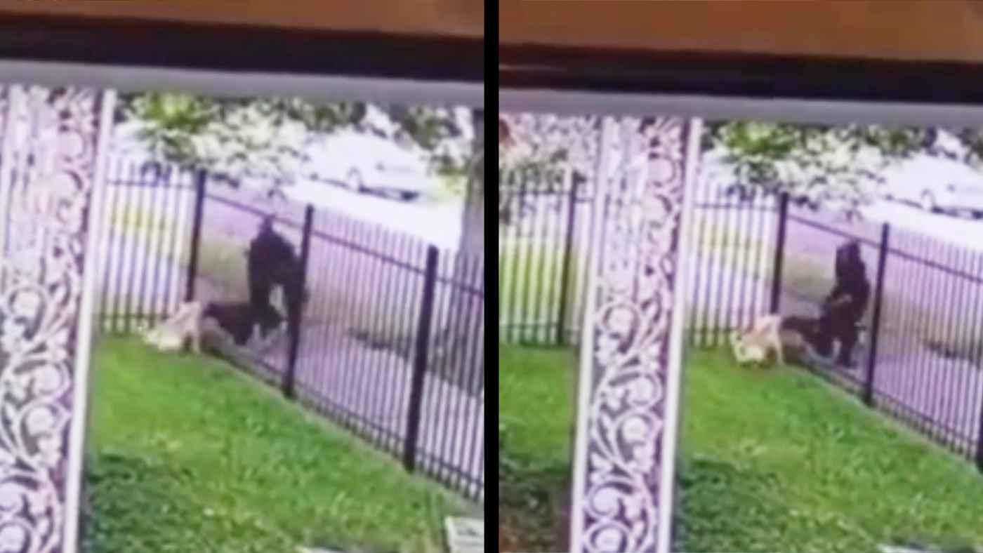 庭のフェンス越しに犬を撃った警察官が物議!警察は「正当な対応だった」と発表!