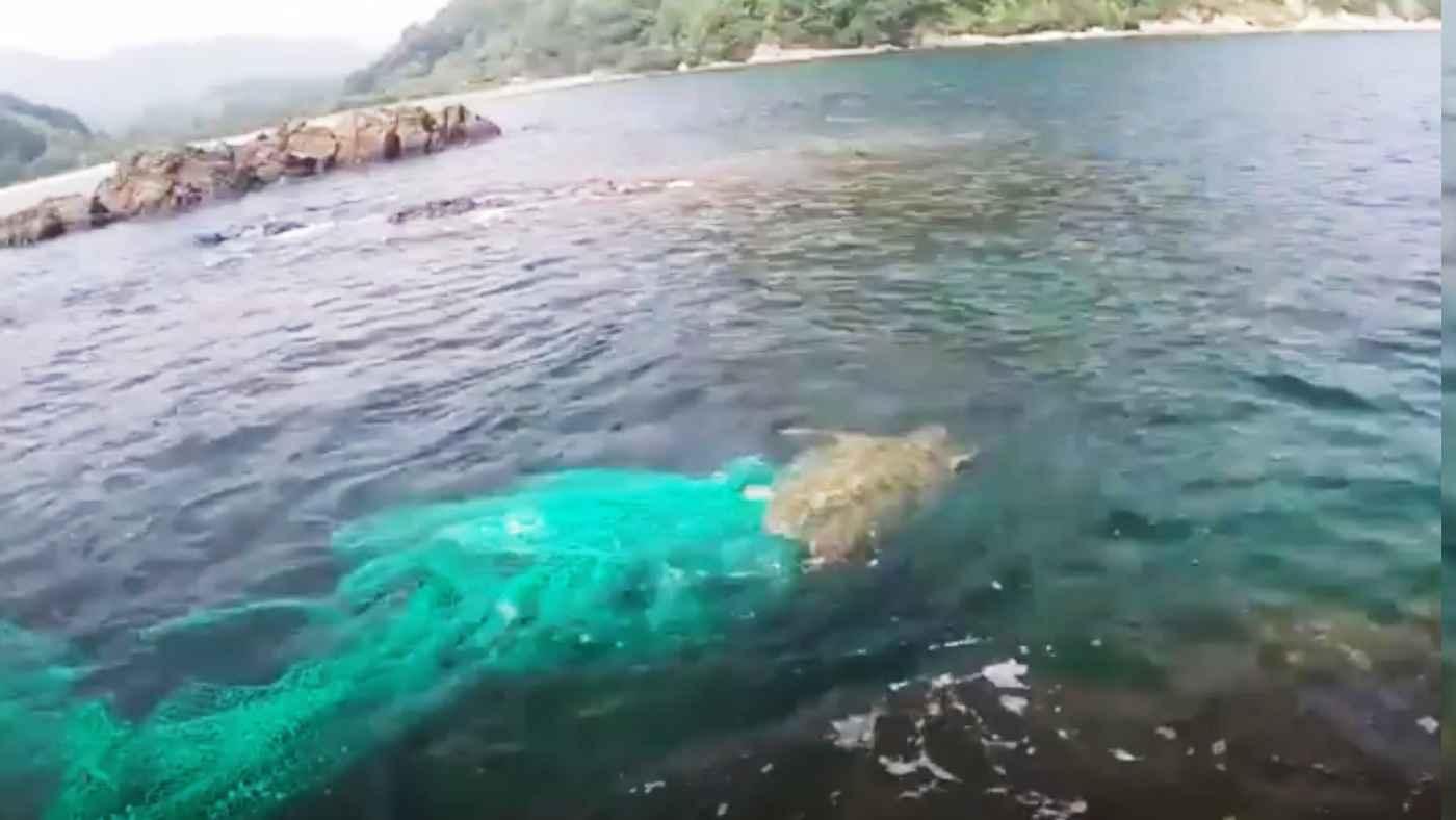 【島根】海上保安庁の機動救難士「海猿」が網に絡まったウミガメに遭遇し救助!