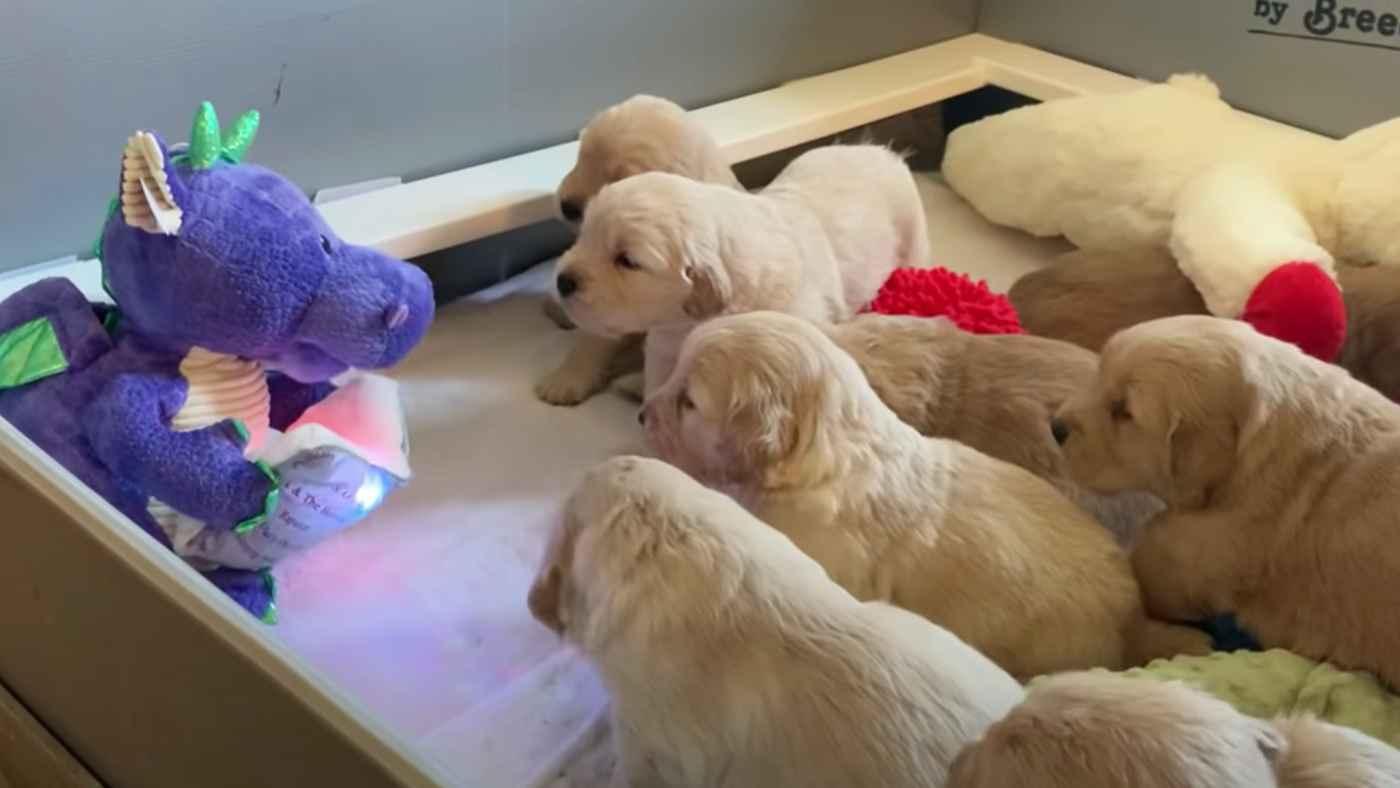 ドラゴンによる朗読会。お行儀よくお話を聞く子犬たちが可愛すぎると話題に!