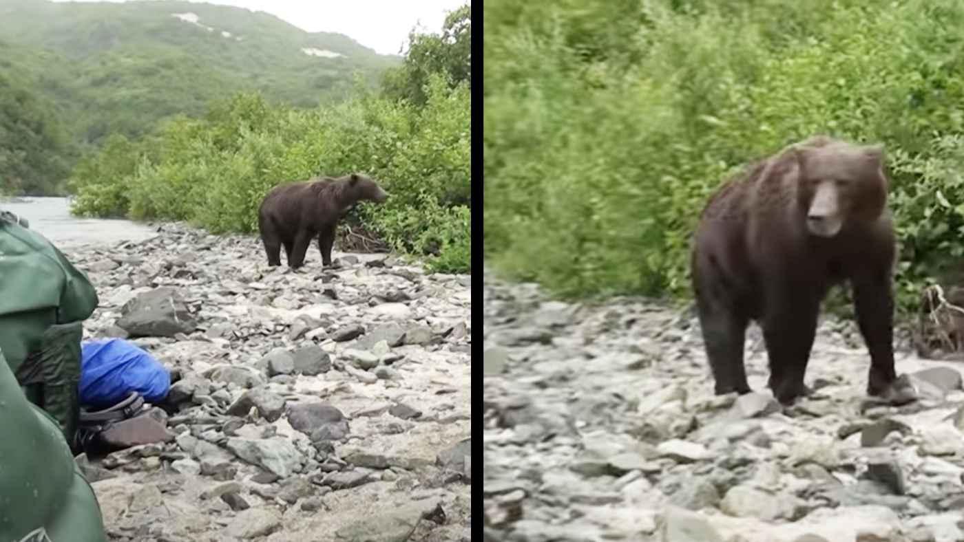 デカすぎるヒグマの魚取りを撮影していたら、突然向きを変えて突進してきた!ヤバすぎる動画が話題に!