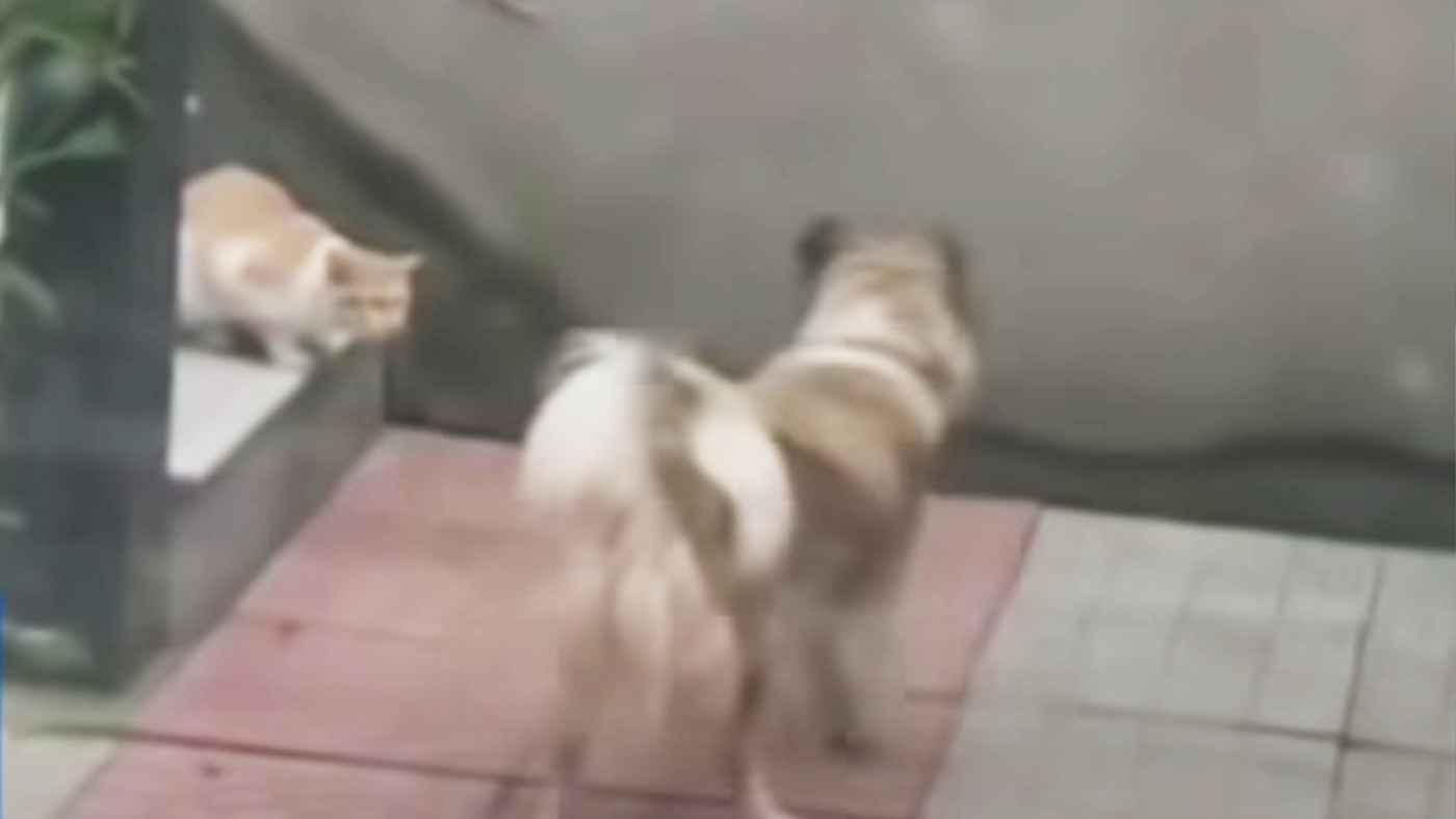 「君、お腹空いているんだろ?」お腹を減らした野良猫を見た犬の行動が素晴らしすぎると話題に!
