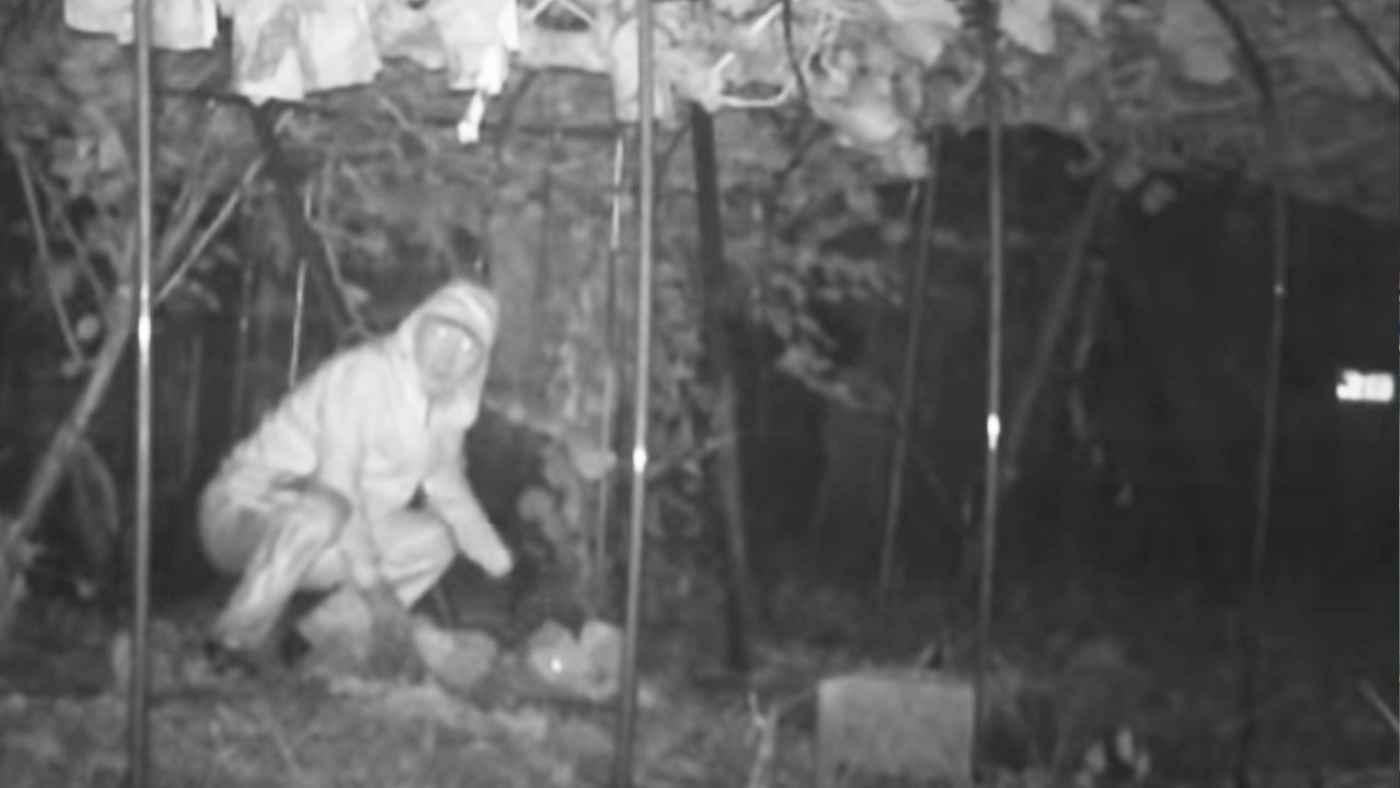 【東京】丹精込めて作った高級ブドウを盗む男が防犯カメラに鮮明に映る!