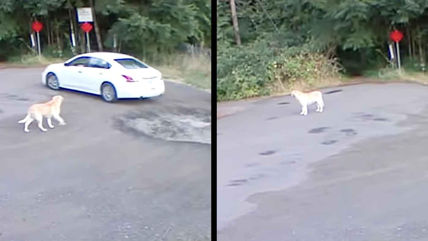 「僕のことが嫌いになったの?」車で来て犬を捨てていく女。ポツンと一人寂しそうな姿に胸が締め付けられる