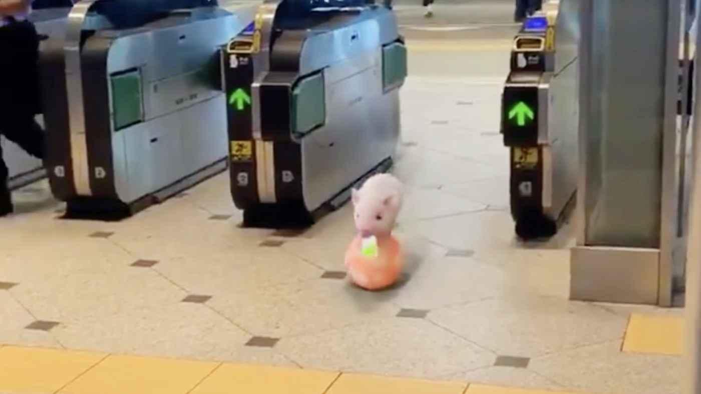 東京駅の改札をSuicaをくわえながらボールに乗って入って来るマイクロ子ブタが話題に!