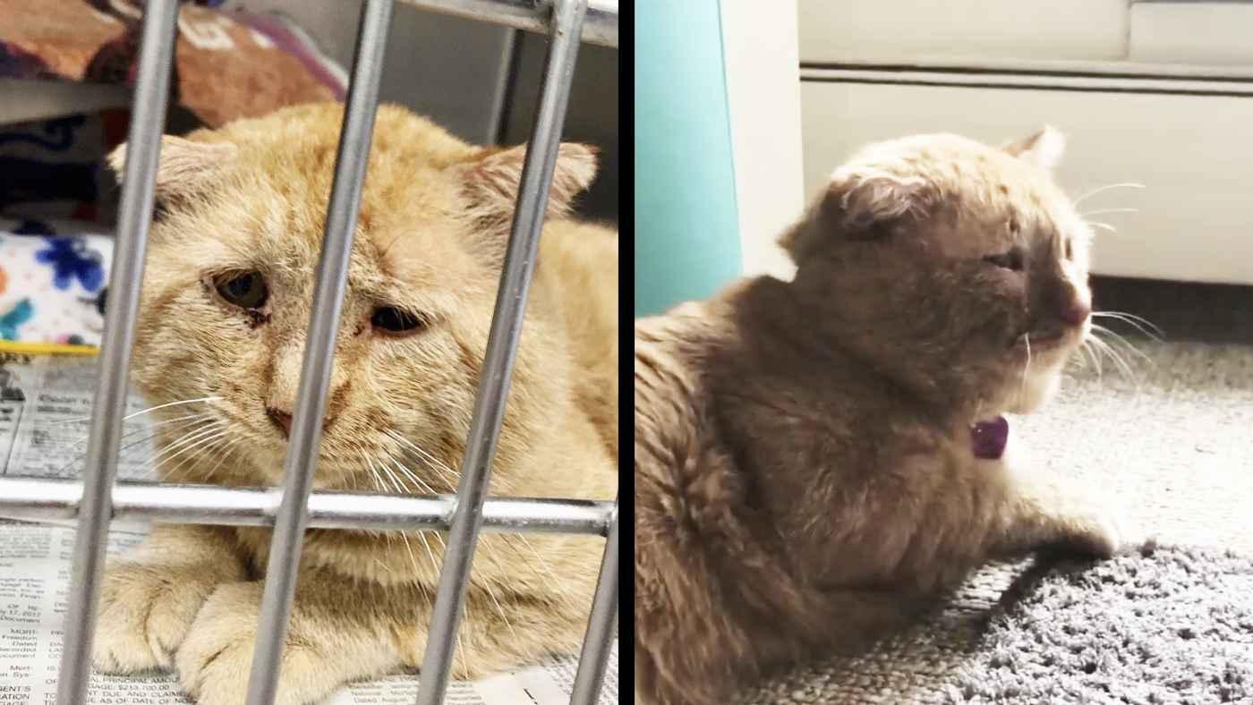 「世界一悲しい表情の猫」と言われた捨て猫。優しい人に救われ1年後に見せた表情に愛の力を感じずにはいられない!