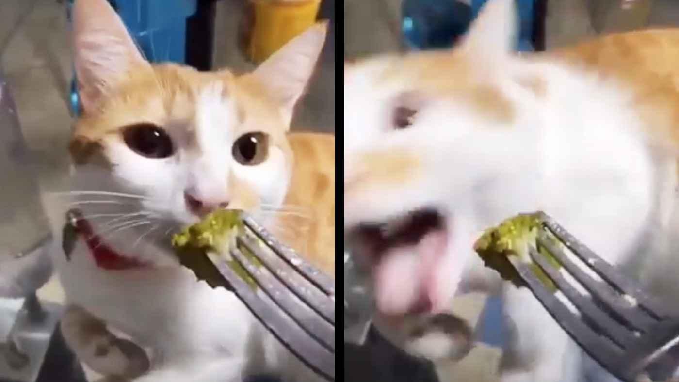ブロッコリーの匂いを嗅いだ猫の反応がおもしろすぎると話題に!