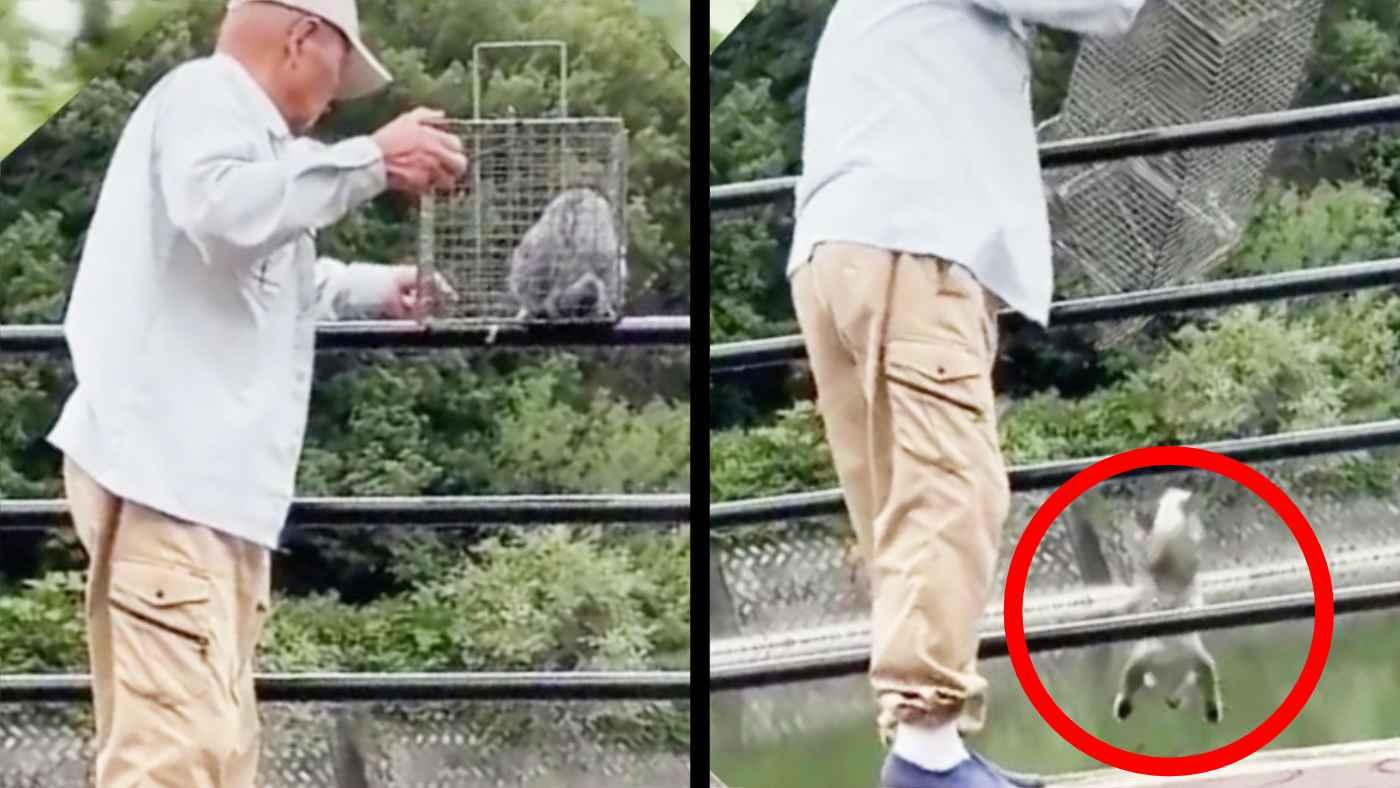 【岡山】「手慣れてる」かなり高低差のある池に猫を捨てる高齢男性が撮影され物議!