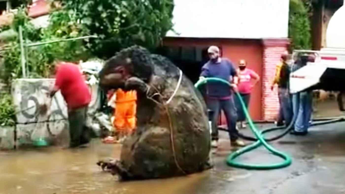 メキシコでの大雨の後、下水道で清掃員が巨大なネズミのようなものを発見し話題に!