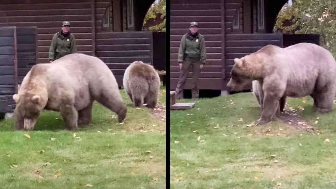 さすがプロ!巨大な野生熊の母子を森に帰らせる国立公園の女性レンジャーがスゴいと話題に!