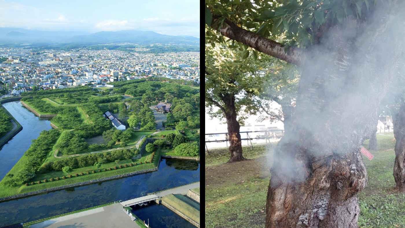 【北海道】「絶対やめて!」五稜郭公園の桜の木の穴が燃えるボヤ騒ぎ!穴の中にあった出火原因に怒りの声!