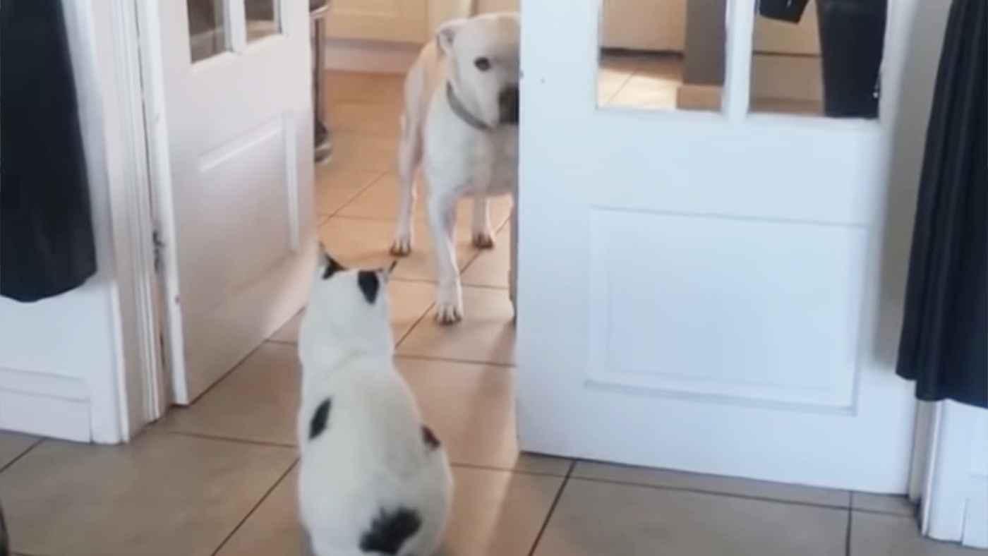 猫のせいで部屋へ入れない犬が可愛すぎる!