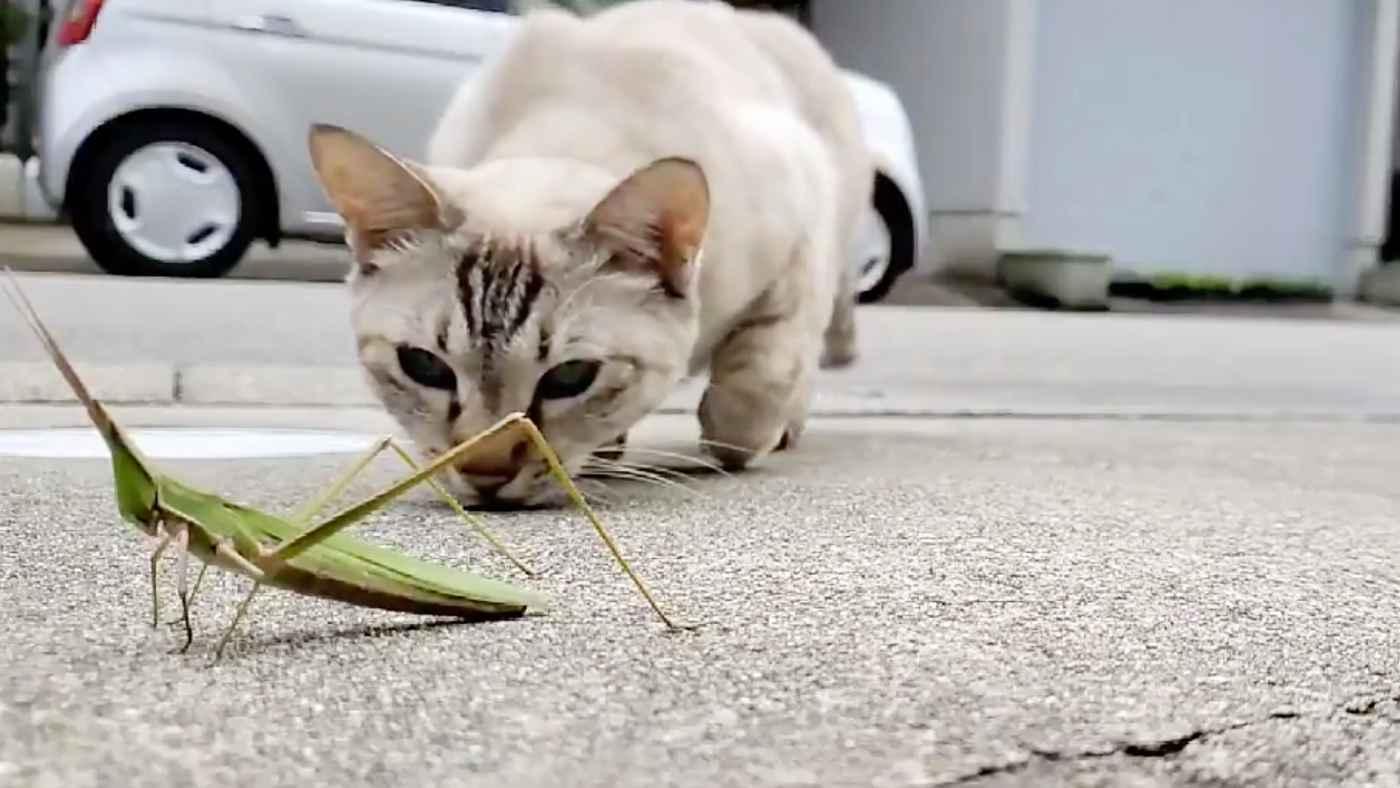 バッタを狙っているのかと思ったらそっちかい!猫の思いもよらぬ行動に多くの突っ込みが寄せられる笑!