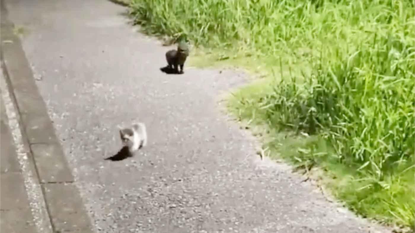 「命がけで必死に主張したんですね」夜道を誰かがついてくると思ったら、いたのは小さな子猫たち。投稿者さんの対応に感謝の声が寄せられる!