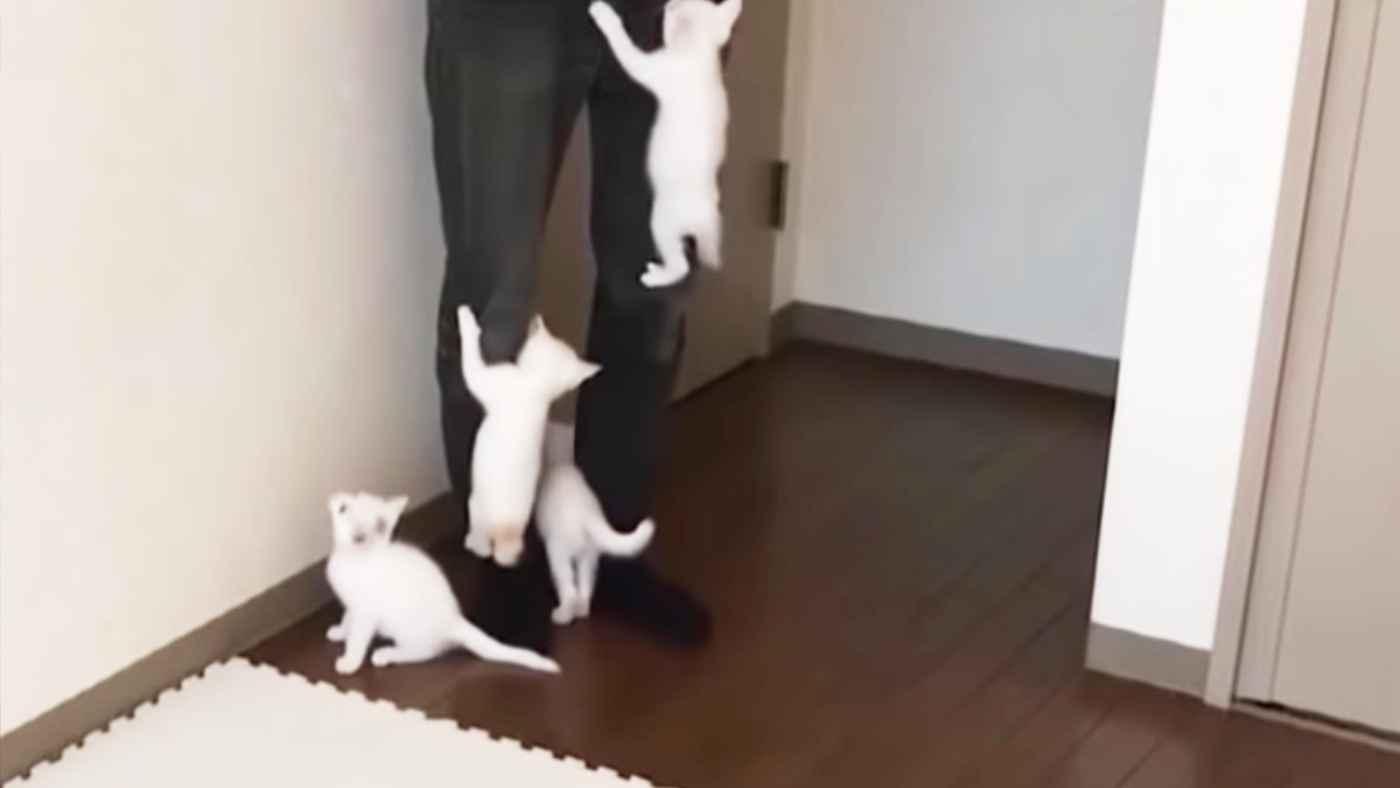 大好きな飼い主さんが帰宅した時の子猫たちの反応が羨ましすぎると話題に!