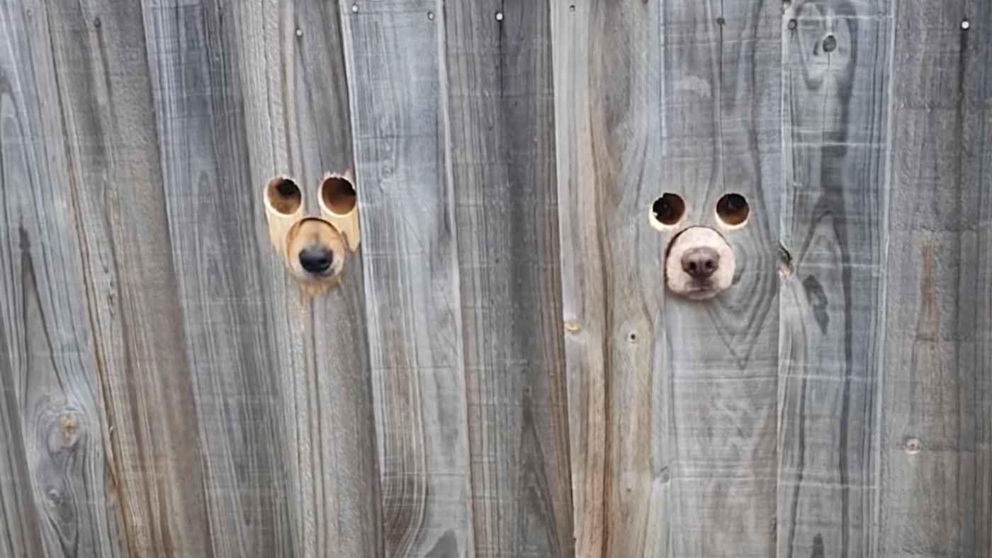 犬専用の「のぞき穴」の前を仕事帰りの飼い主さんが通ったら、2匹の犬が可愛すぎる反応をして話題に!
