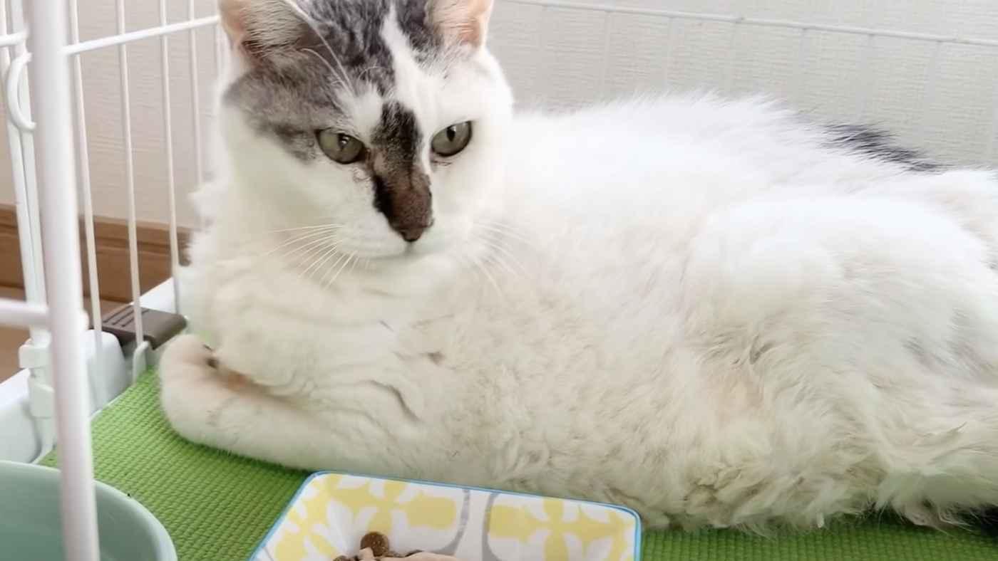 【日本】5年間真っ暗な納戸に閉じ込められ立つこともできない猫を救助。しかし3日後悲しいことが起こり胸が痛む