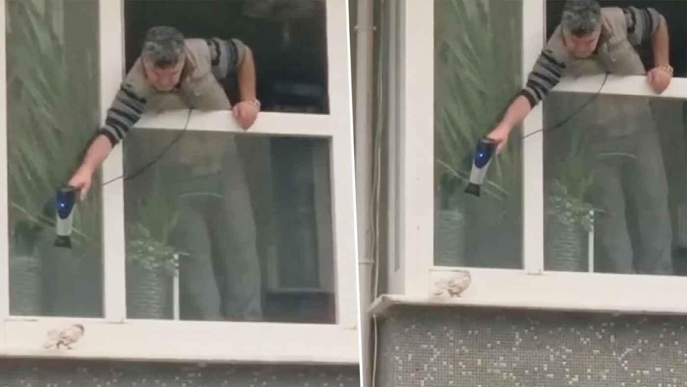 窓の外で震えるハトを助けるための男性の作戦が創造的すぎると話題に!
