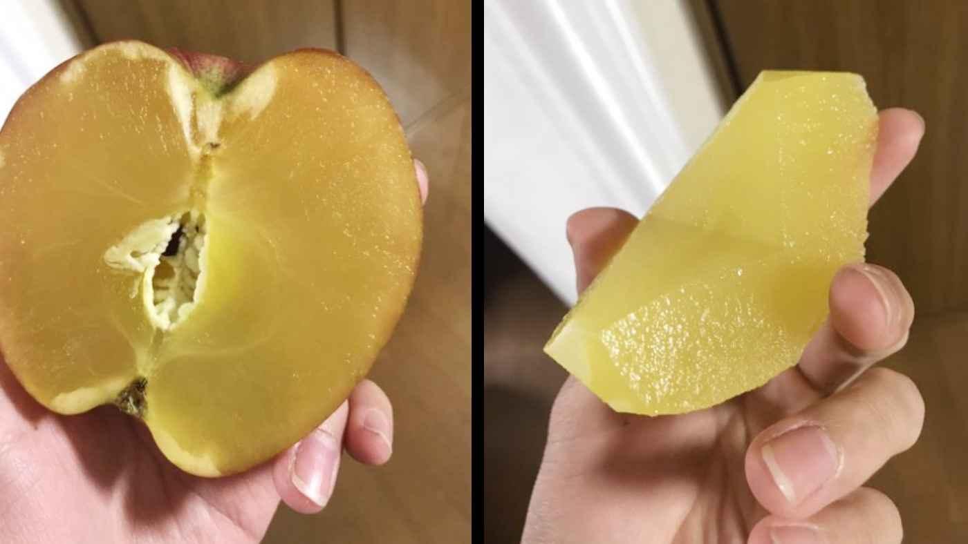 「当方リンゴ農家ですがこんなの初めて」100%蜜リンゴが収穫され話題に!食べてみた感想に驚きの声!