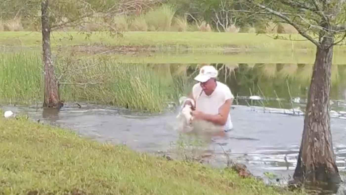 ワニに捕まった愛犬を池に飛び込んで、口をこじ開け助けるおじいさんが話題に!