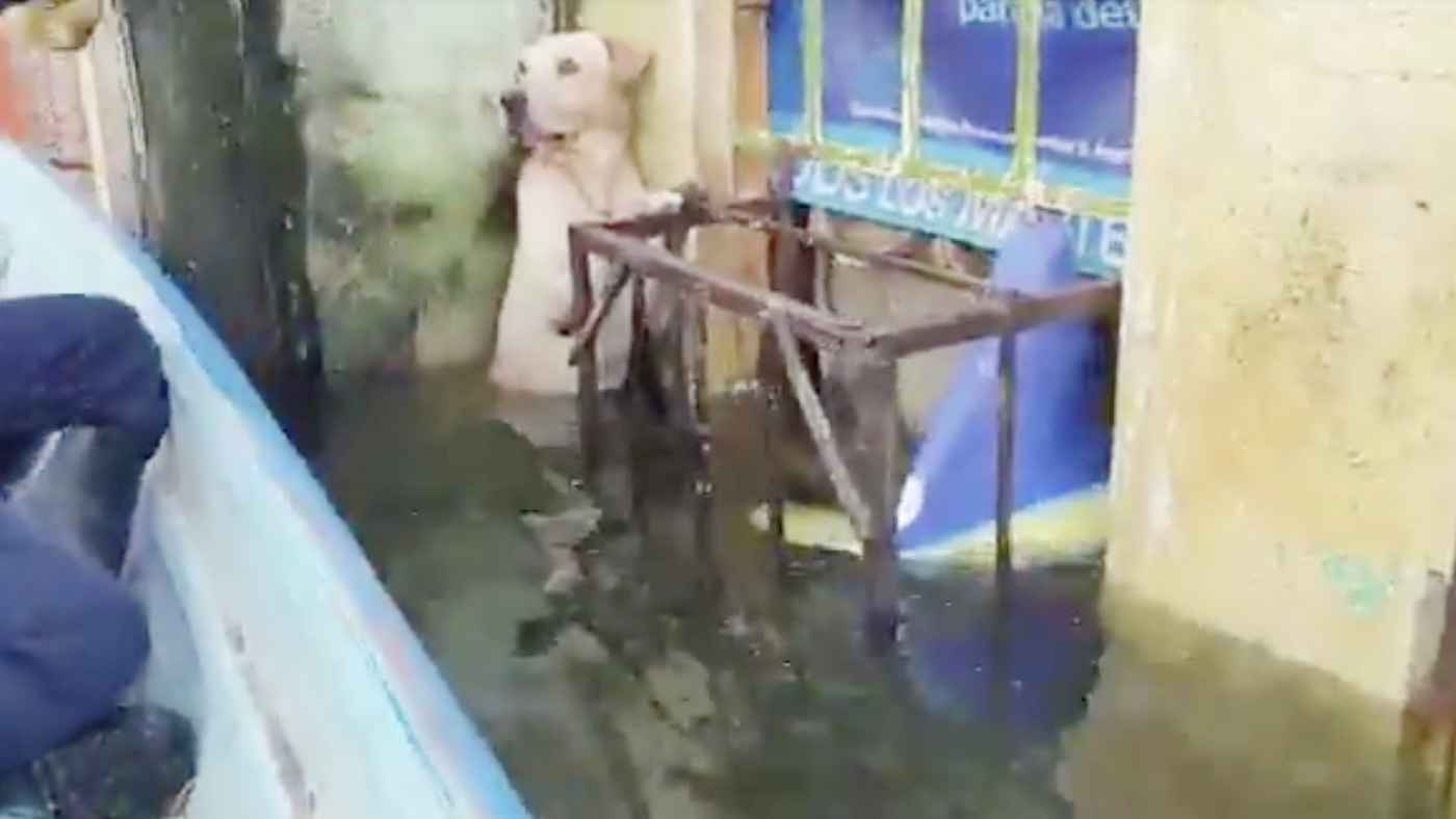 洪水で水没した街で必死にしがみついていた犬を海軍が救助!そのまま隊員として活躍することに!