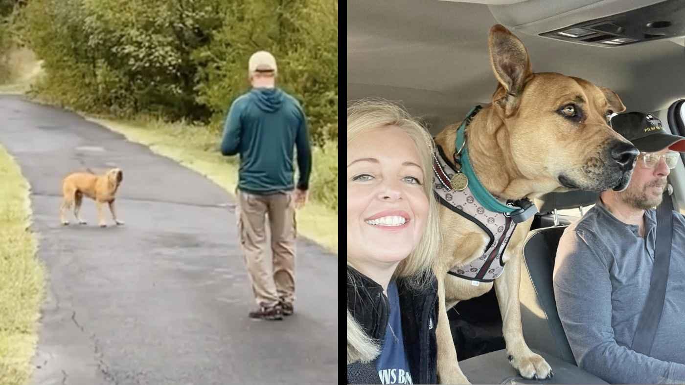 山で捨て犬を見つけた夫婦。信頼関係を築き少しづつ心を開かせていく1年間の記録