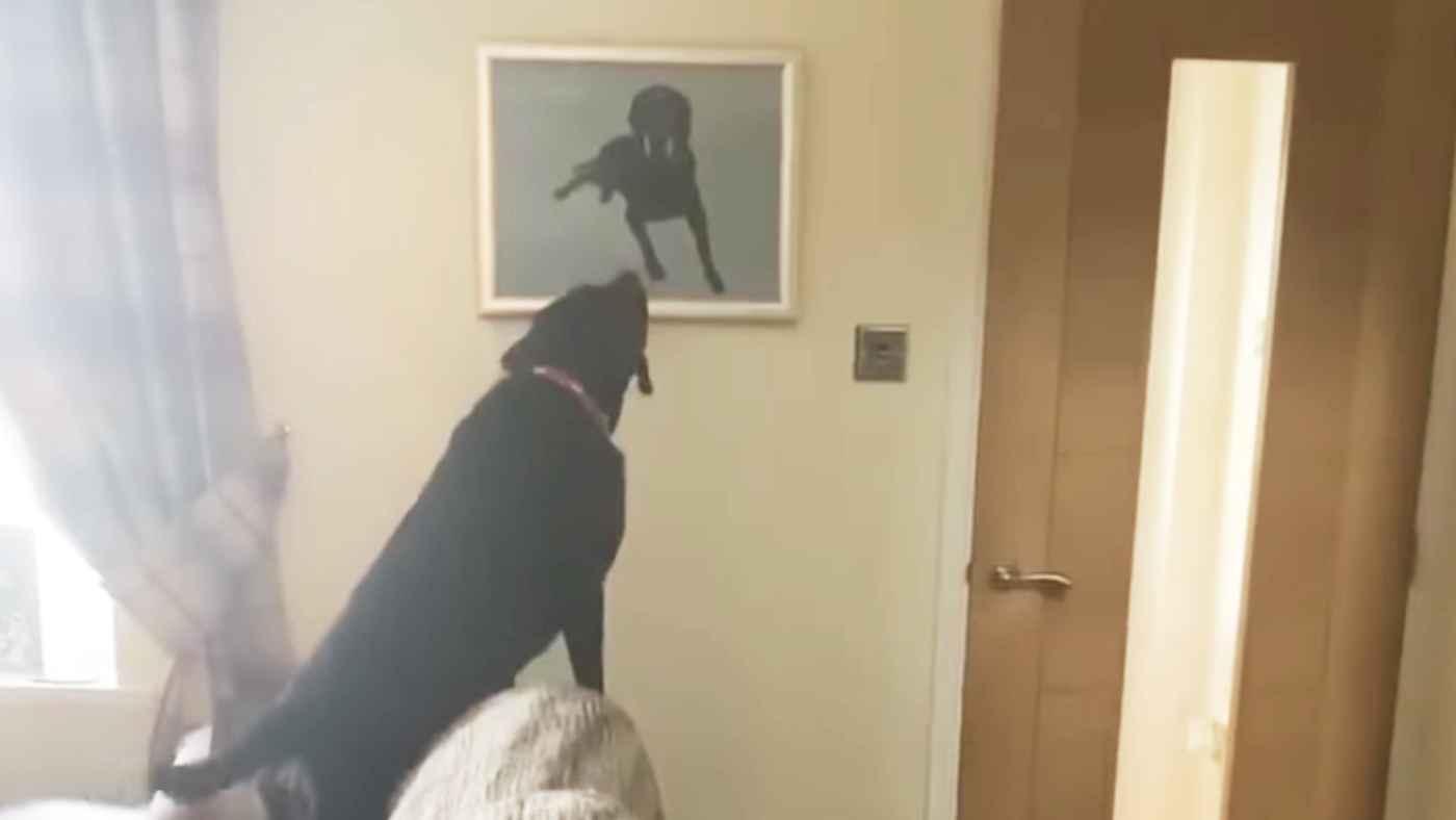 「早くそこから出てきて遊ぼうよ!」亡くなった兄弟犬の肖像画を見た犬の純粋な行動に多くの人が涙する
