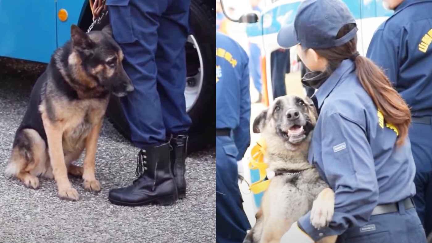大切な式で不安になってしまった警察犬。仲間犬の大胆すぎる行動を見て安心する!