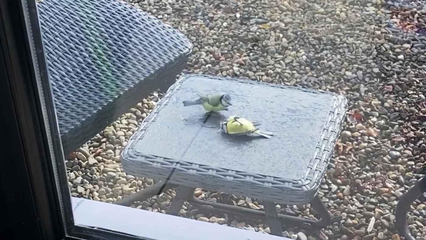 窓ガラスにぶつかって動かなくなってしまった小鳥。仲間の思いやりある行動が話題に!