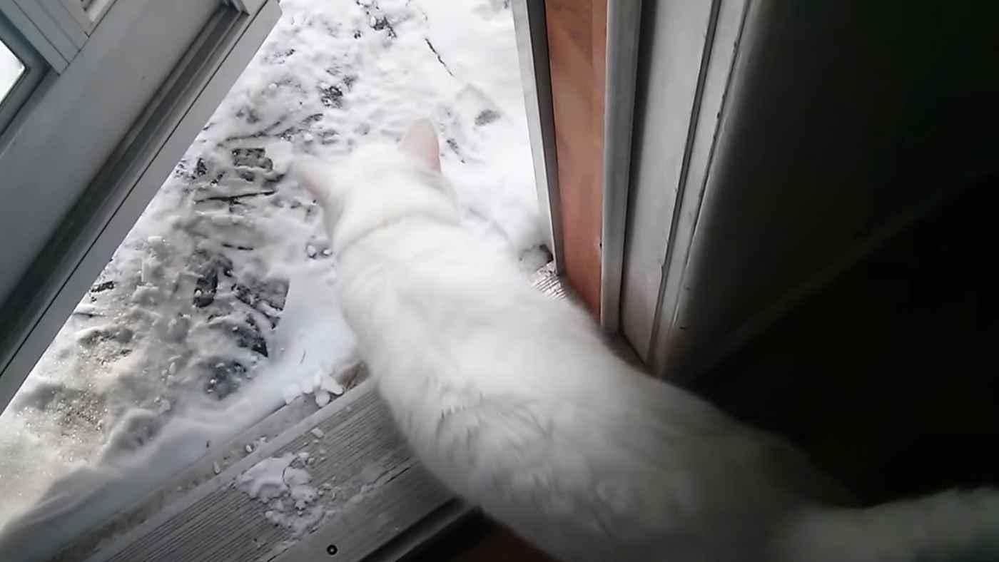 「外に出せにゃー!」張り切って雪の積もった庭に踏み出した猫。しかし一瞬で「やっぱ無理」となって取った行動が可愛すぎる!