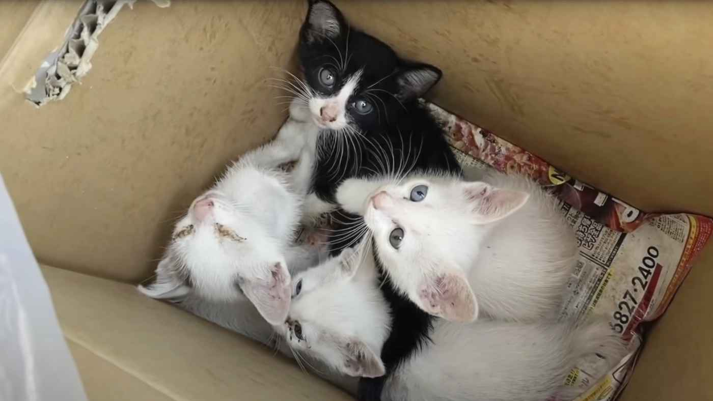 炎天下の中ガムテープでピッタリ閉じられた箱に捨てられた子猫たち。保護してシャンプーをするとすごい数のノミが出た!