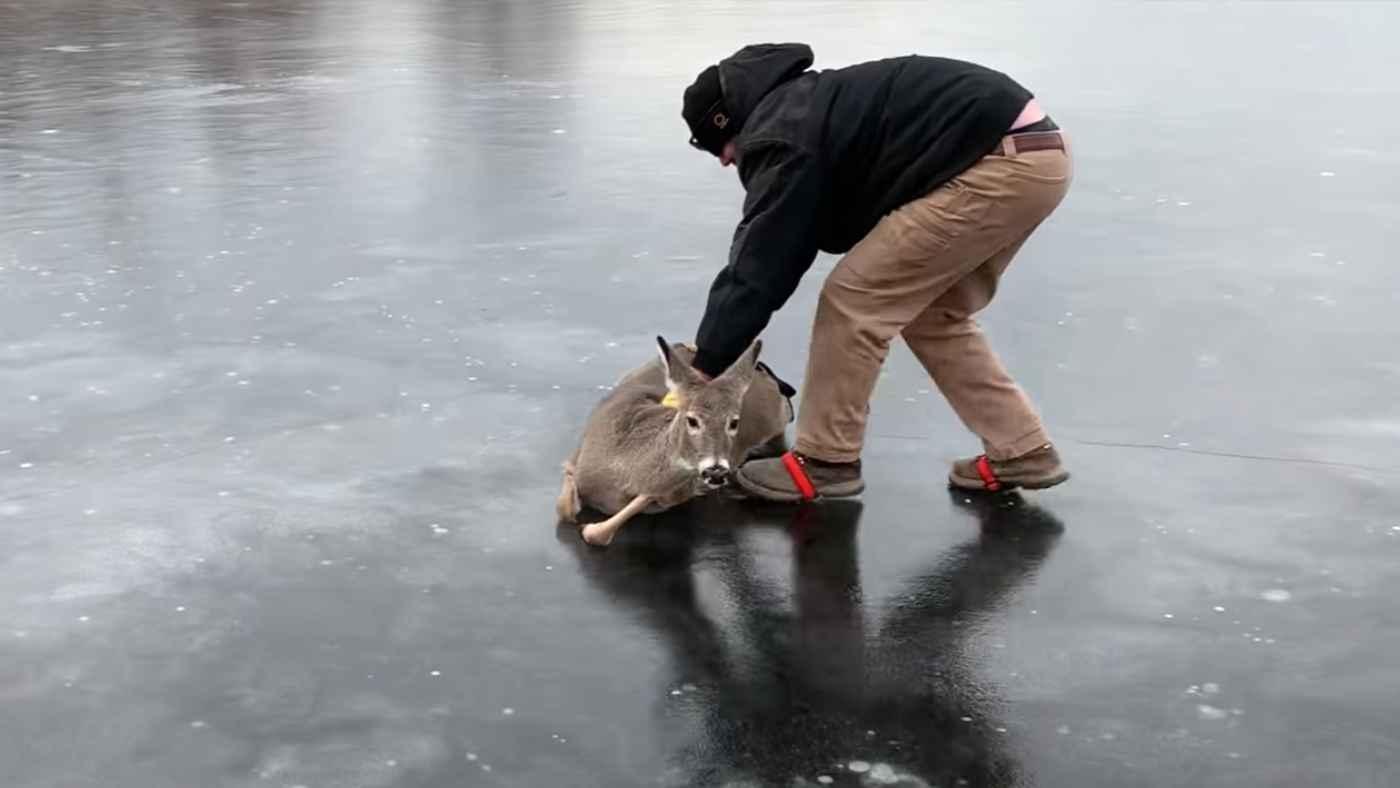 氷上で動けなくなっている鹿を救助!最後は元気に走り去る!