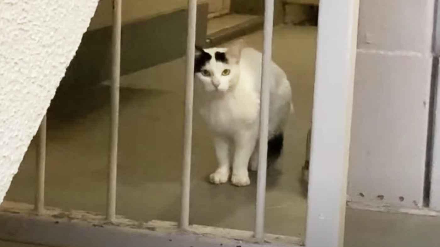 「引越しで捨てた」戻ることのない飼い主を待ち続ける猫が保護!