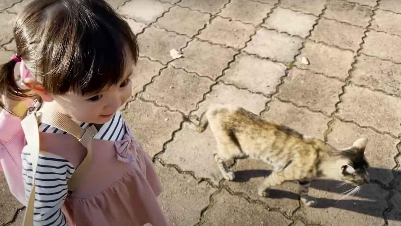 1歳の女の子と野良の子猫の不思議な会話が話題に!「このくらいの年の子は猫と意思疎通が出来る」