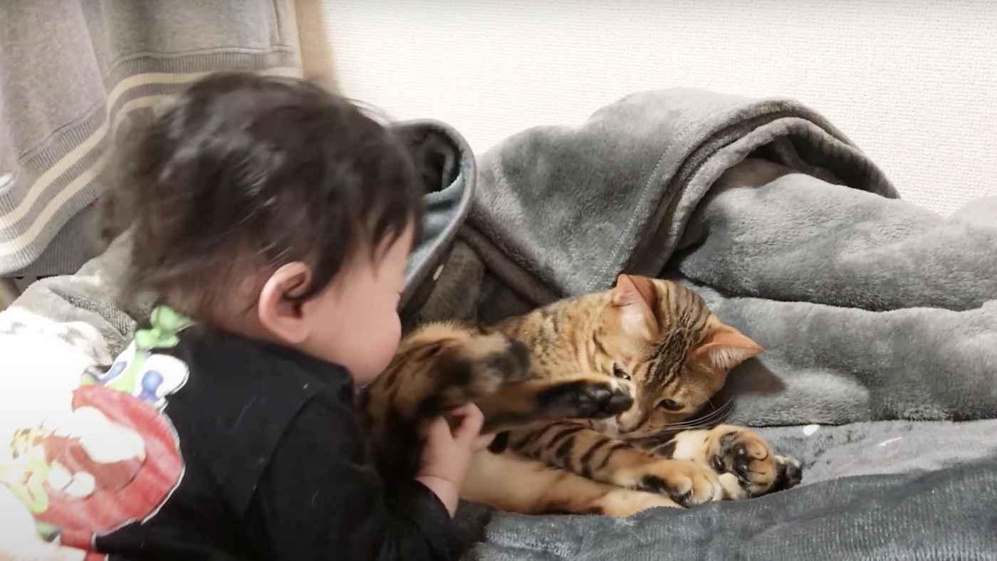 大人には噛み付くのに、赤ちゃんがどんなに無茶なことをしても許す猫!