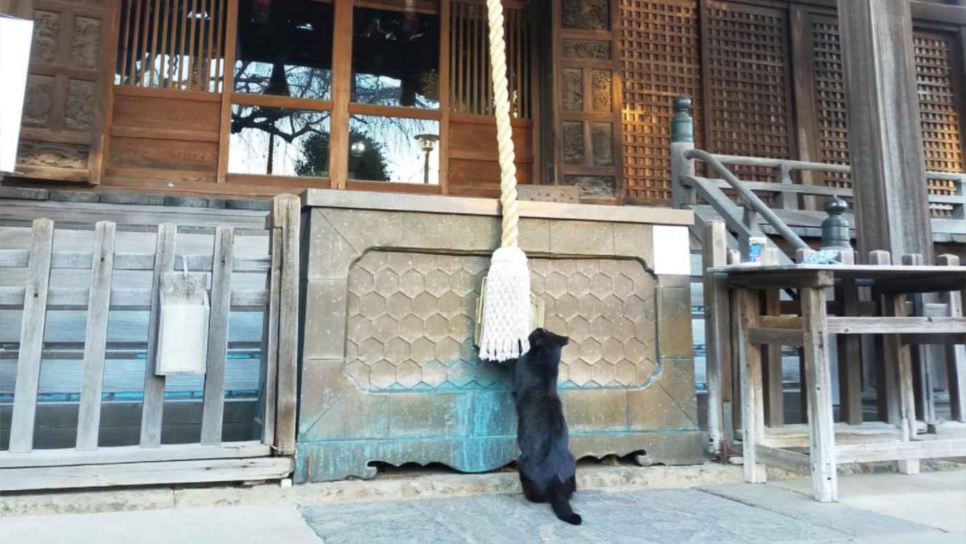 初詣をする猫が目撃され話題に!何を祈ったのだろう