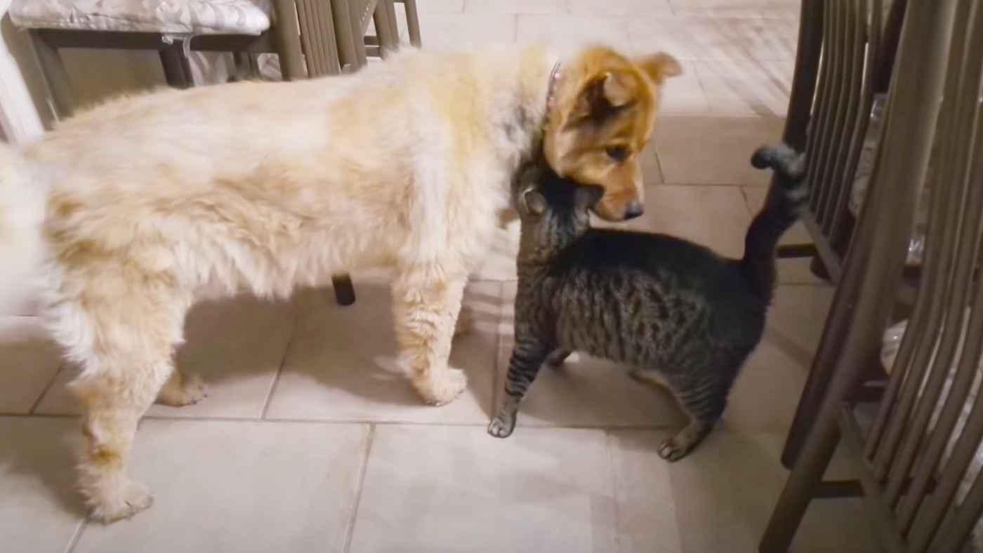 盲目の親友犬と久しぶりに再会した猫の反応に涙!