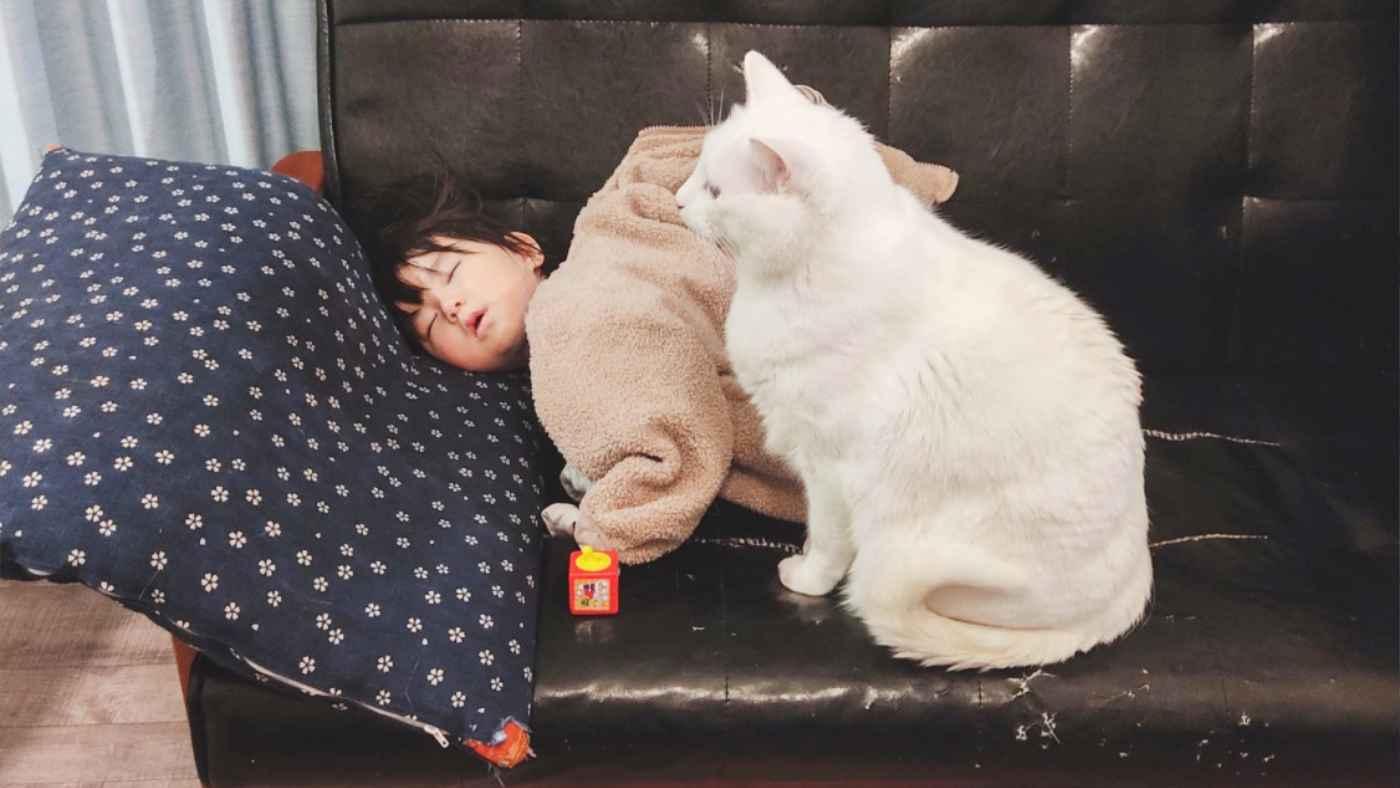 ソファーで寝落ちした娘さんをずっと見守ってくれている猫が話題に!