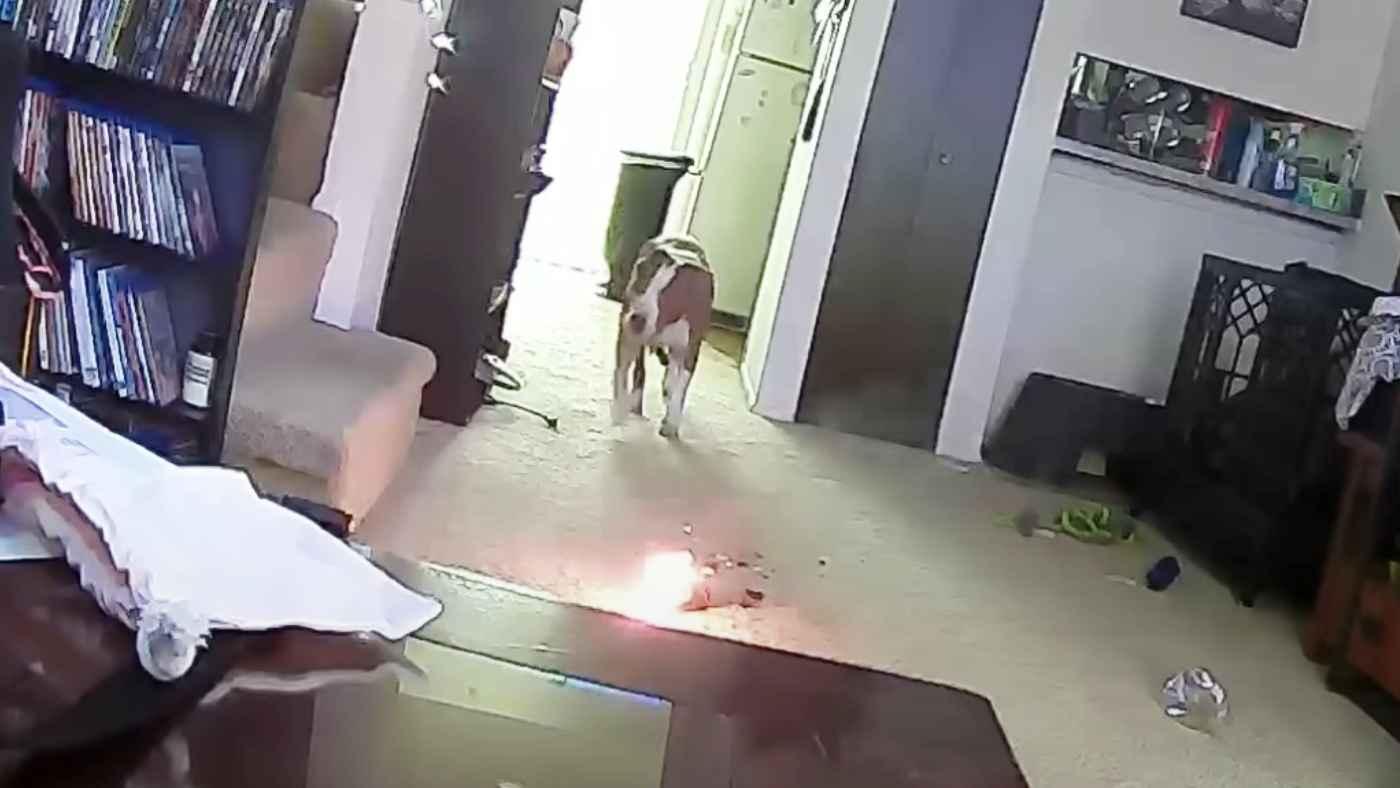 犬だけでの留守番はどこの家庭にもある思いもよらぬものが出火原因になることがわかる動画が話題に!