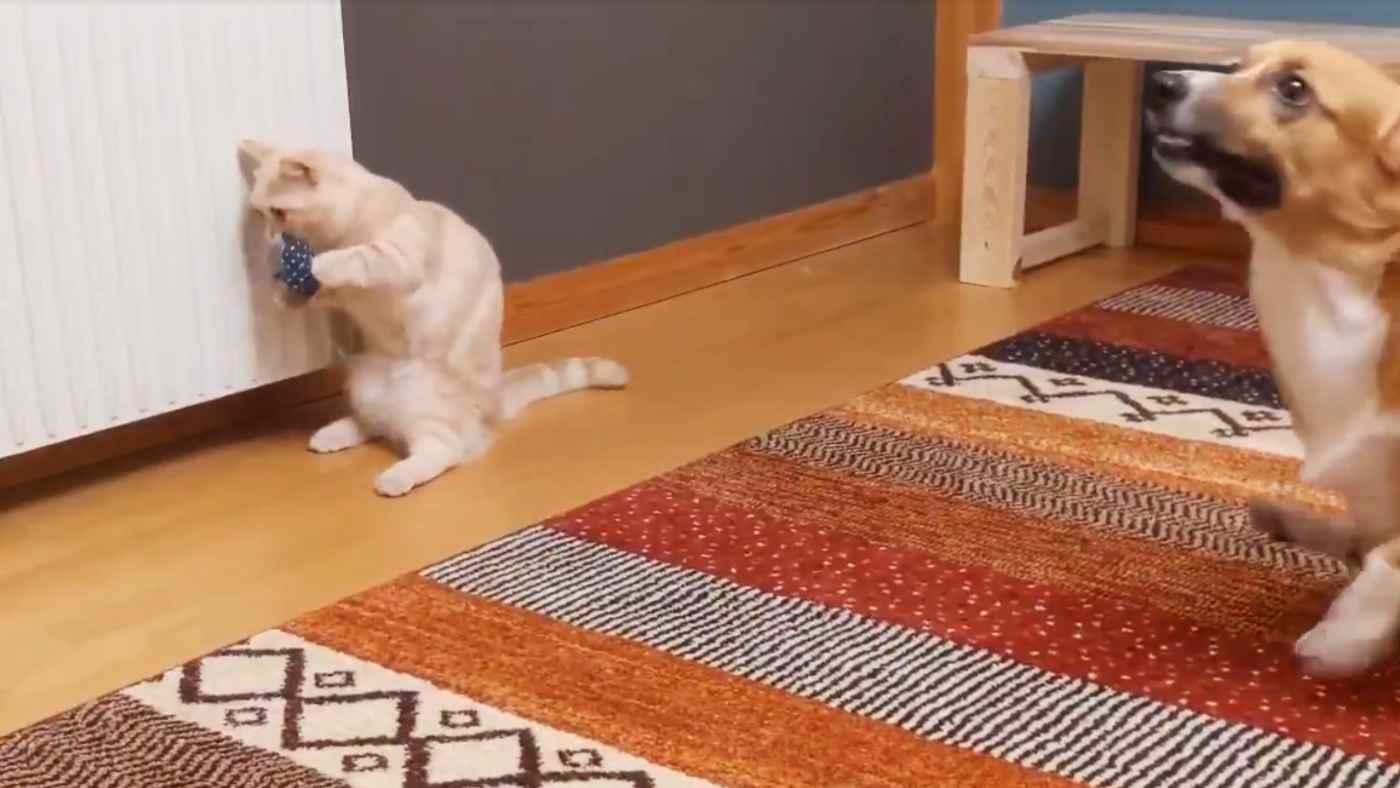 【犬猫コント】犬の変な移動方法を見て戸惑いが隠せない猫の動画がコントのようだと話題に!