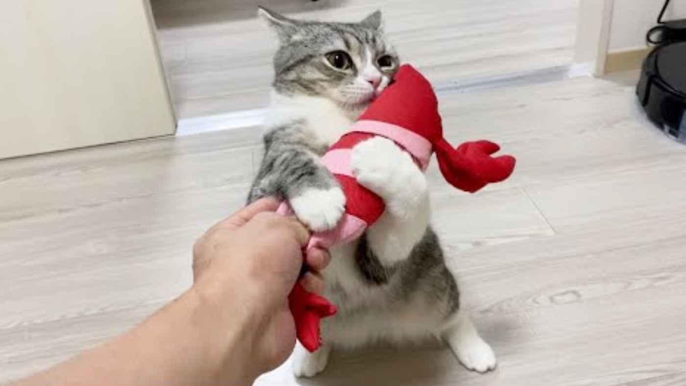 「もう君のことは絶対放さにゃい!」破れたエビのオペが完了し再会した時の猫の反応が可愛すぎると話題に!