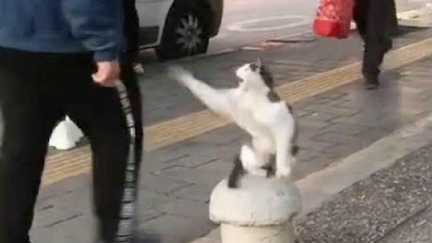 通行人に激しすぎるハイタッチをしまくる猫が可愛いと話題に!